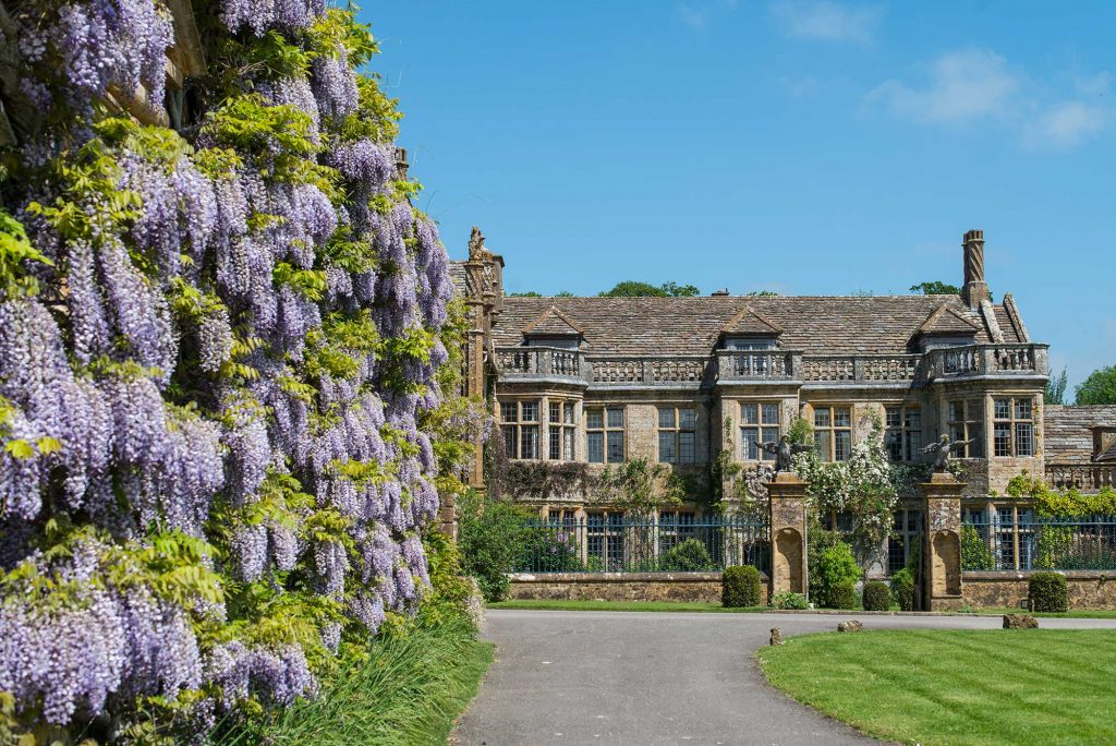 wisteria-on-the-stable-block-mapperton-house